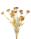 WILD YARROW X 5 GOLD