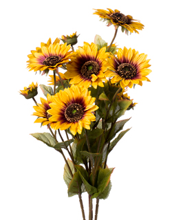 SUNFLOWERS X 5 GOLD